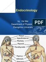 XIII   Endocrinology