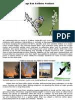 Aves que chocan contra las ventanas Chicago Bird Collision Monitors english