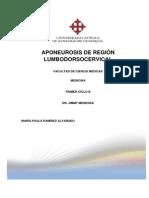 Aponeurosis de Región Lumbodorsocervical