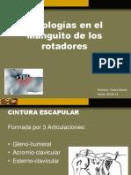 Patologías en El Manguito de Los Rotadores