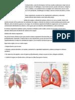 El Aparato Respiratorio Generalmente Incluye Tubos