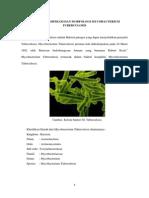 Tugas Mikrobiologi DKK