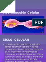 CICLOCELULARII