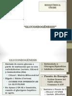 UD. 5- MCH 4-Gluconeogenesis 12-3.ppt