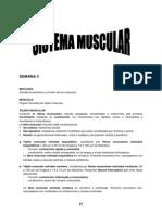 SEMANA 3 - Sistema Muscular