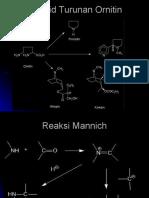 Alkaloid Turunan Ornitin
