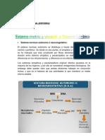 Sistema Autonomo y Sistema Limbico DJFB