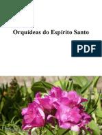 Orquídeas_do_Espírito_Sto