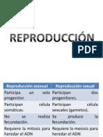 CLASE DE REPRODUCCIÓN