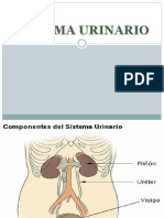 Tutoria Sistema Urinario
