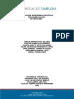 Catalogo Macro Metamorfismo