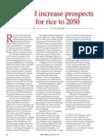 Rice Today Vol. 13, No. 3, Grain of truth