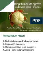 Identifikasi Mangrove