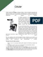 BIOLOGIA CELULAR.docx