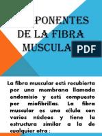 Componentes de La Fibra Muscular Exposicion