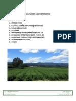 Cultivarea Salciei Energetice KWG v3 Site
