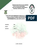 Universidad Mayor de San Andrésrabanito