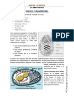 clase parasito 7 _ 16-11-11.pdf