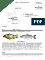 FAO Fisheries & Aquaculture - Programa de Información de Especies Acuáticas - Cyprinus Carpio (Linnaeus, 1758)