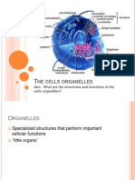 cell structures and functions 02.pptx