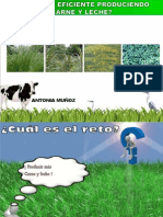 ABC en El Manejo Del Pasto.prof.ANTONIA MUÑOZ