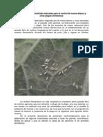 Elaboracion de insecticidas naturales para el control de mosca blanca y otras plagas domesticas-1.pdf