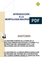 introduccion morfologia macroscopica