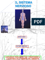 Biologia El Sistema Nervioso i 10de Abril 3m