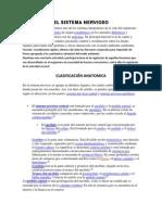 El Sistema Nervioso_infoexpo