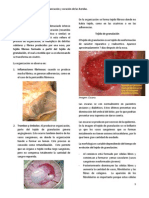 Patologia Clase 25 - Inflamacion V