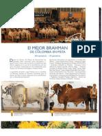 Mejor Brahman