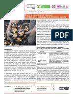 El cultivo de la papa [en Colombia]