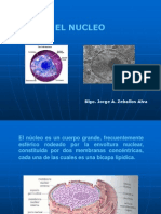 Biologia Nucleo
