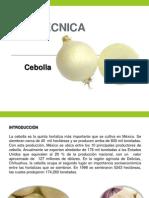 Ficha Técnica Cebolla