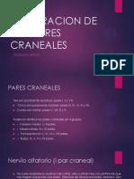 Expl Pares Craneales