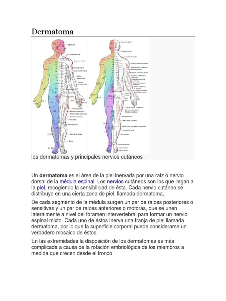 Dermatoma, Miotoma, Metarona- Conexionmes Cutaneas Con Medula ...