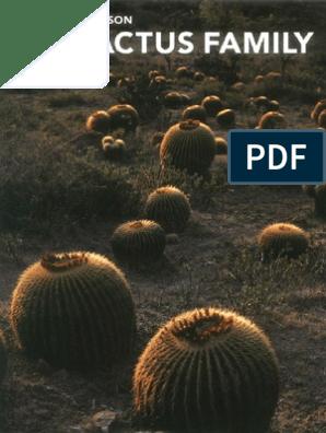 Flat Ear Cactus 12cm Pot Consolea rubescens Road Kill Cactus