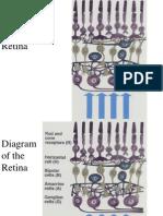 Diagrams of the Retina