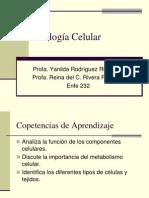 Biologia Celular 232