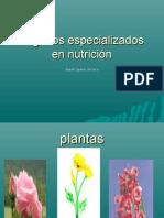 Órganos especializados en nutrición.biologia jes@