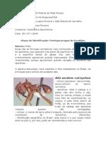 Trabalho Receituário - João Batista e Gustavo Lopes