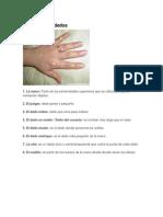 La mano y los dedos