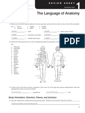 Exercise 1 Language of Anatomy | Anatomical Terms Of