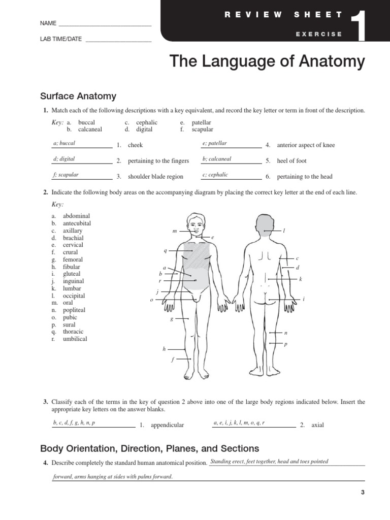 Exercise 1 Language of Anatomy – The Human Body an Orientation Worksheet Answers
