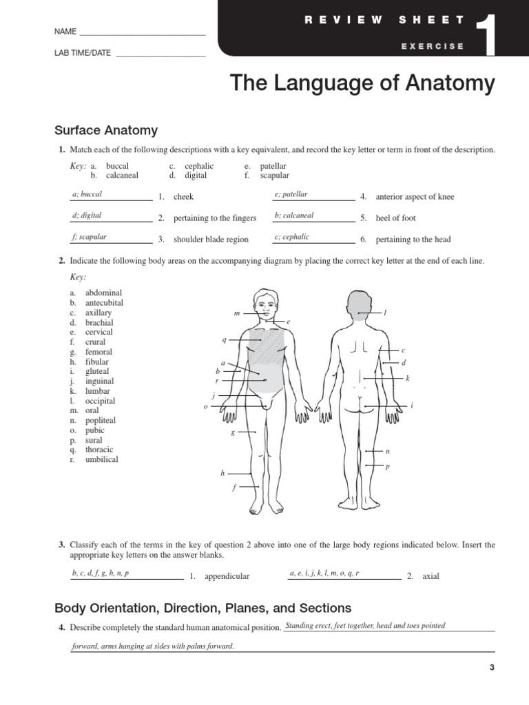 Exercise 1 Language of Anatomy – Anatomical Position Worksheet