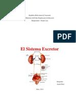 El Sistema Excretor