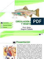 CIRCULACION_ANIMAL_VEGETAL.ppt
