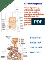 digestivo_1.ppt
