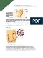 Infecciones y Enfermedades de Transmisión Sexual Chabelo