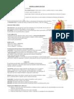 Sistema Ciruculatório2 Final PDF